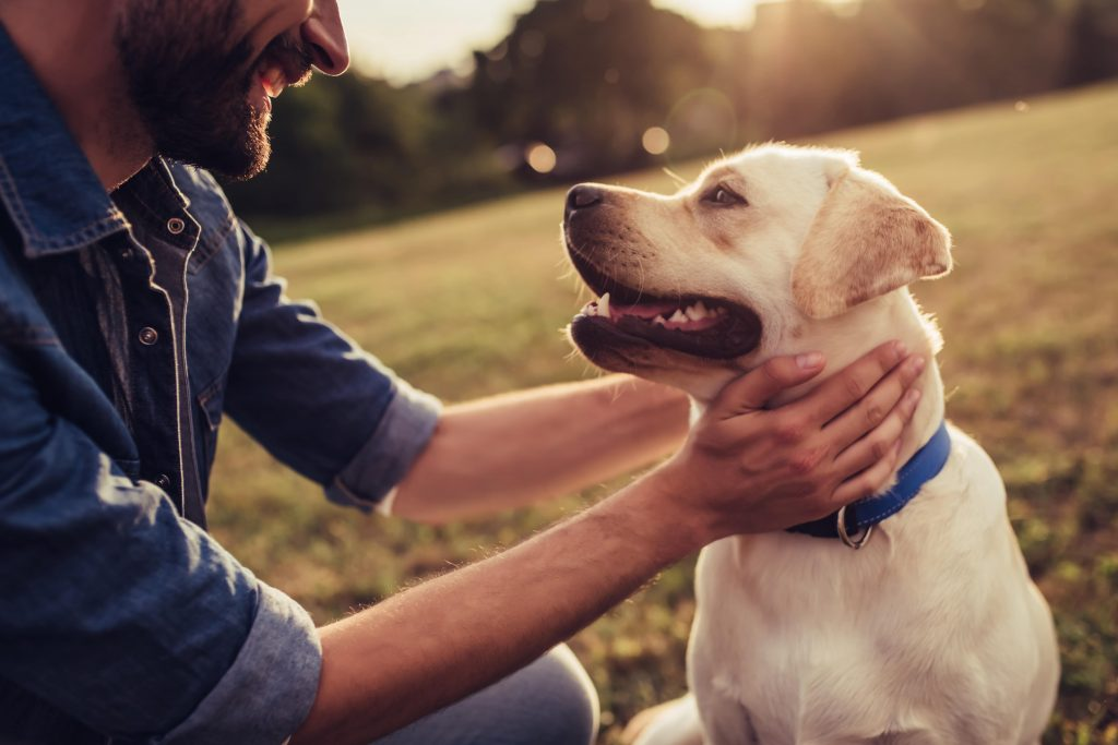 Dog Friendly Holidays Looking after your dog.